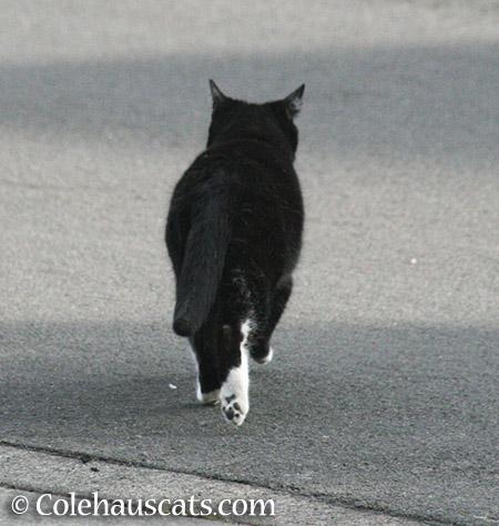 Mystery Man - 2015 © Colehauscats.com