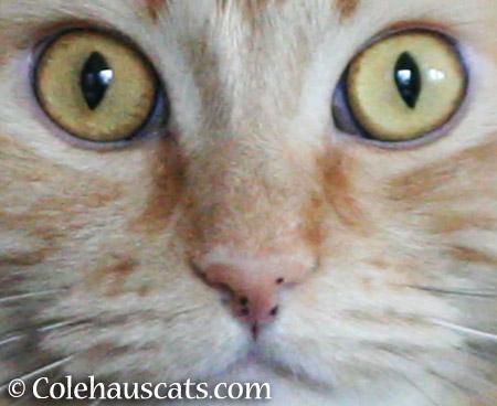 Pia's nose freckles - 2015 © Colehauscats.com