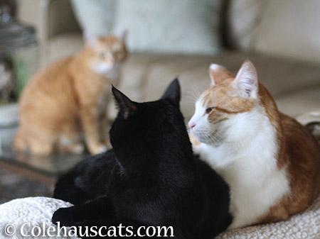 I'll protect you - 2015 © Colehauscats.com