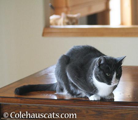 Uh oh - 2015 © Colehauscats.com