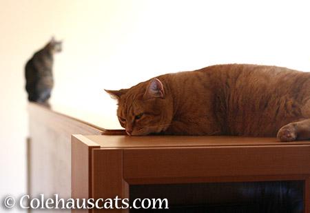 Viola and mama Zuzu, a still life - 2015 © Colehauscats.com