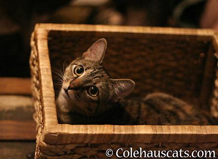 Viola's new basket - 2015 © Colehauscats.com