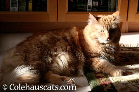Ms. Grumps McGrumperson - 2015 © Colehauscats.com