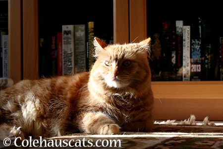 Pia GrumpyPants - 2015 © Colehauscats.com