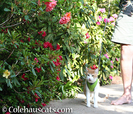 Quint looking for color - 2015 © Colehauscats.com
