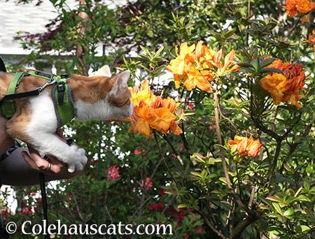 Quint finds summer orange -