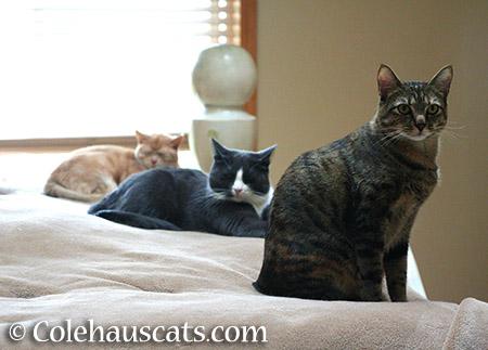 Miss Newton, Tessa, and Viola - 2015 © Colehauscats.com