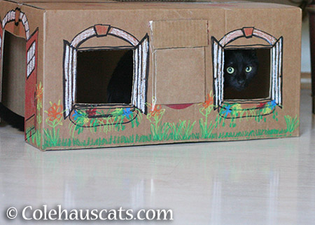 Olivia like a box house with laminate flooring - 2015 © Colehauscats.com