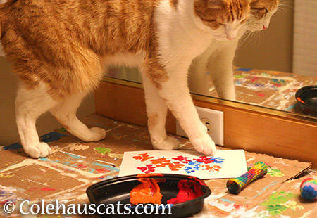 Adding red and orange - 2015 © Colehauscats.com