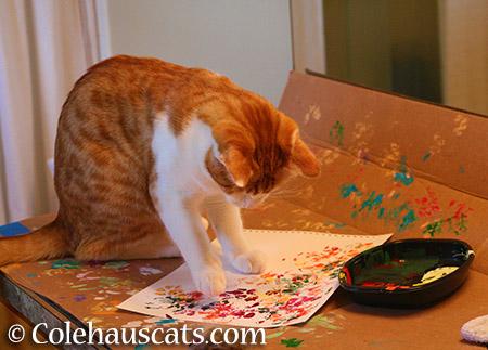 Practice makes purr-fect - 2015 © Colehauscats.com