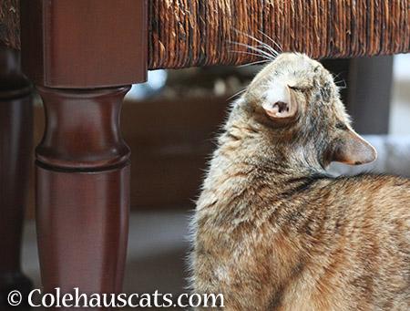Bench sniffs - 2015 © Colehauscats.com