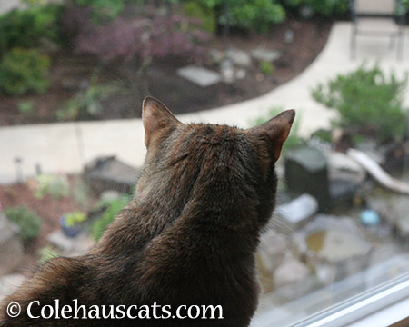 Overlooking the Garden - 2015 © Colehauscats.com