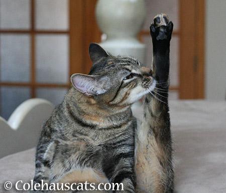 Purr-fect Yoga - 2015 © Colehauscats.com