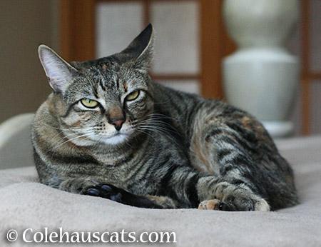 Skeptical Viola - 2015 © Colehauscats.com