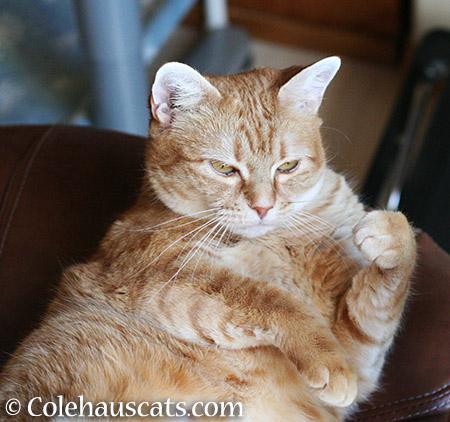 Okay, I'm up - 2015 © Colehauscats.com
