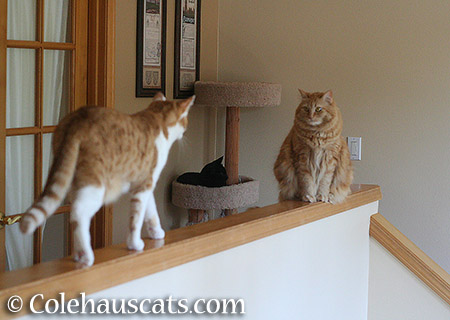 Cats on the bannister. Again. - 2015 © Colehauscats.com