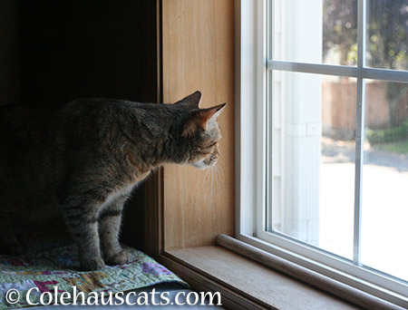 Exploring a new window - 2015 © Colehauscats.com