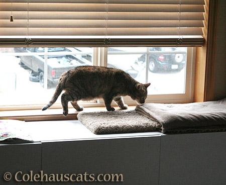 New fleece blanket? - 2015 © Colehauscats.com
