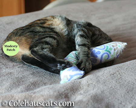 Viola sleeping with Pia's kick stick - 2015 © Colehauscats.com