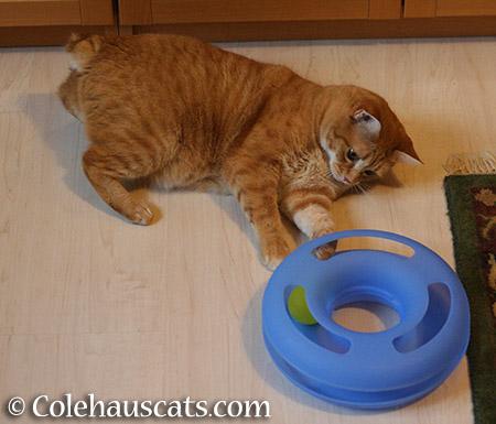 Zuzu's ring toy - 2015 © Colehauscats.com