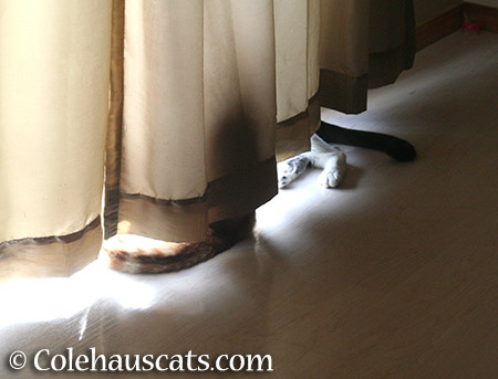 The Curtain Thing - 2015 © Colehauscats.com