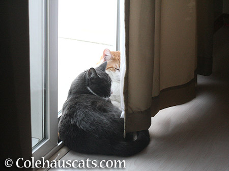 We see you - 2015 © Colehauscats.com