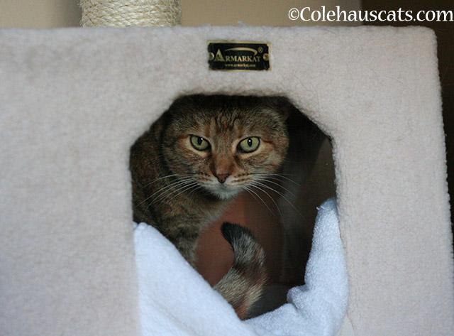 HomeAgain  - 2015 © Colehauscats.com