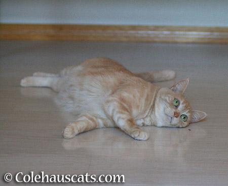 Miss Newton, Bugcatcher - 2015 © Colehauscats.com