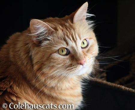 Pia Bean - 2015 © Colehauscats.com