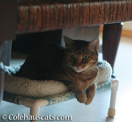 Restful Ruby - 2015 © Colehauscats.com