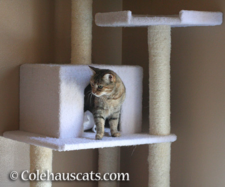 It's Ruby's tower... - 2015 © Colehauscats.com