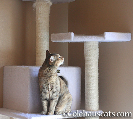 ...it looks like her tower... - 2015 © Colehauscats.com