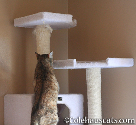 ...it's tall like her tower - 2015 © Colehauscats.com