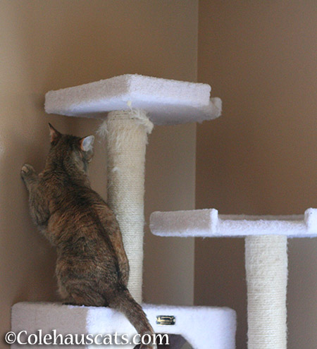 ...a high place like her tower - 2015 © Colehauscats.com