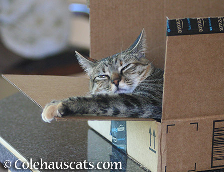...comes in boxes her size. - 2015 © Colehauscats.com