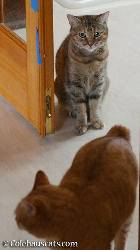 Defender Ruby - 2015 © Colehauscats.com