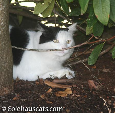 Gardening with Momo - 2015 © Colehauscats.com
