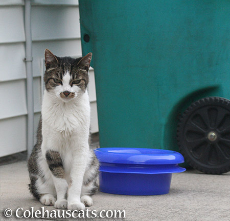 Visiting neighbor cat Mustacheo - 2015 © Colehauscats.com