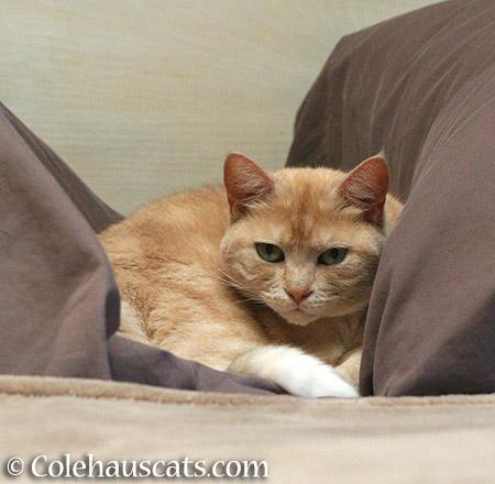 A nap for Miss Newton - 2015 © Colehauscats.com