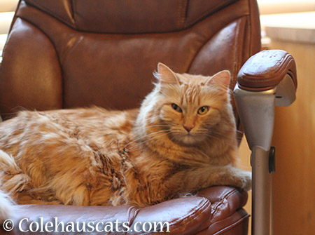 Pia's chair? - 2015 © Colehauscats.com