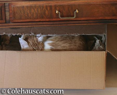 Quint in a box - 2015 © Colehauscats.com