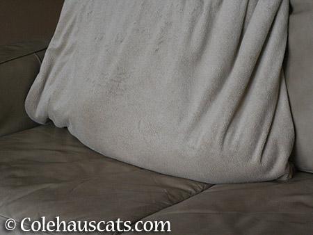 Quint in a bundle - 2015 © Colehauscats.com