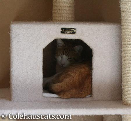 Quint's Hideout - 2015 © Colehauscats.com