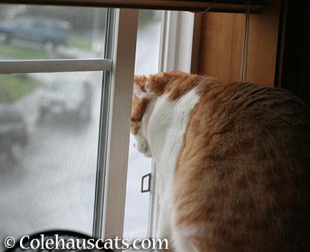 No good smells - 2015 © Colehauscats.com