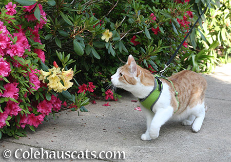 Quint loves strong colors in the garden - 2015 © Colehauscats.com