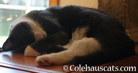 Tessa Off - 2015 © Colehauscats.com