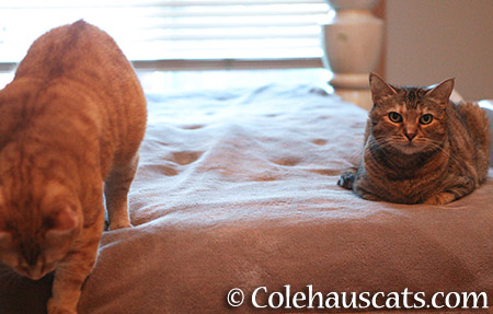 Zuzu and Ruby, getting along - 2015 © Colehauscats.com
