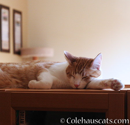 Quint - 2015 © Colehauscats.com