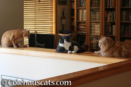 Library Girls - 2015 © Colehauscats.com