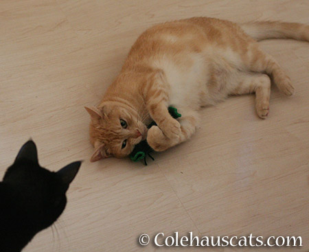 Huh? © Colehauscats.com